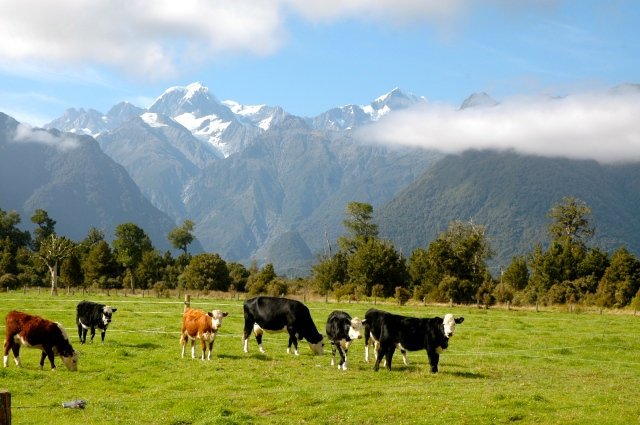 Os Montes Cook e Tasman ao fundo