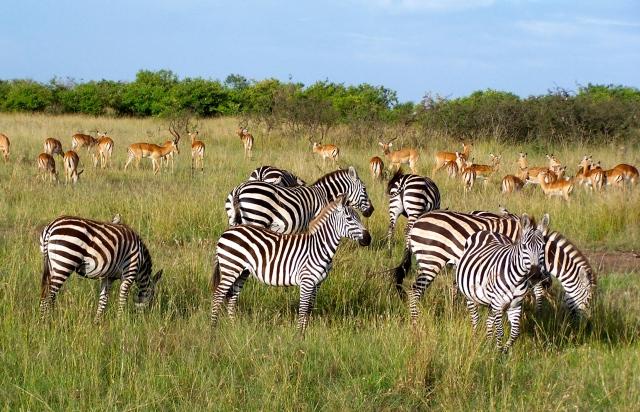 A vida selvagem é abundante no Quênia
