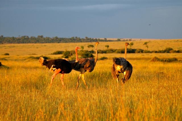 Ao amanhecer os animais saem para se alimentar