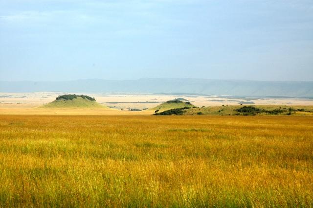 As pastagens naturais são abundantes na savana