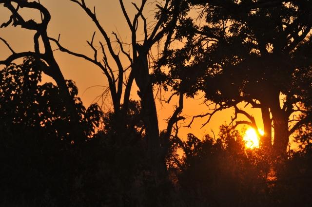 Quando o sol nasce é hora de sair para o safari.