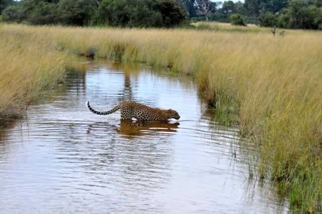 O melhor safari da viagem