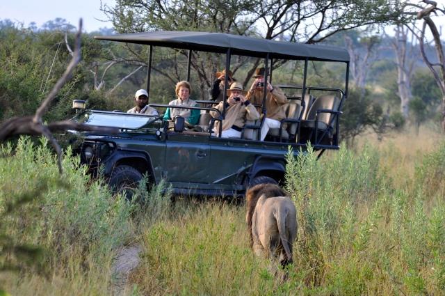 A sensação era de que o Leão ia saltar sobre a Land Rover