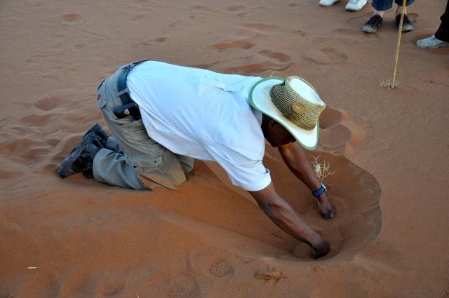 O nosso guia no rastro das aranhas do deserto.