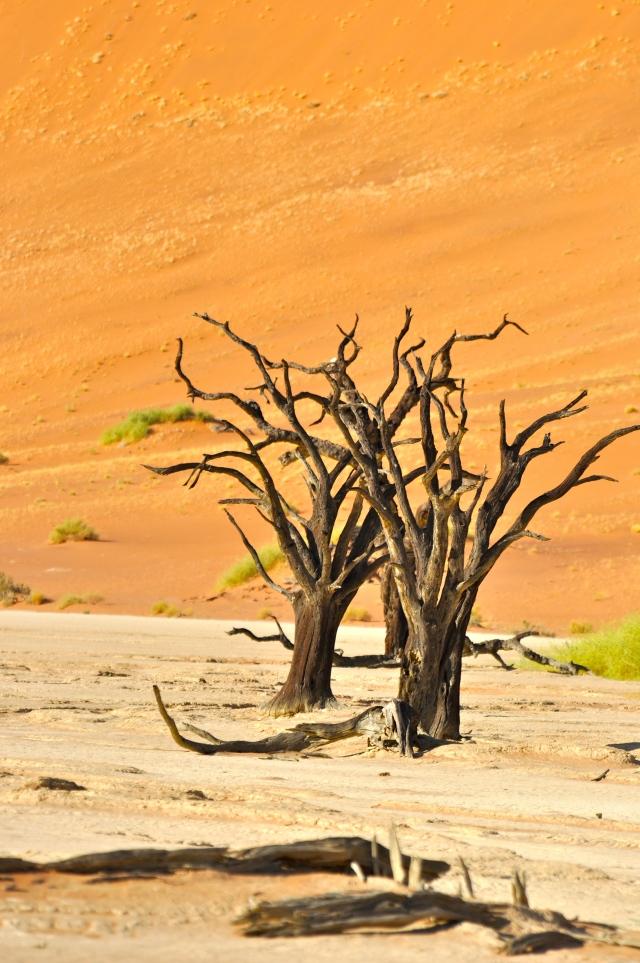 Algumas das árvores do Vale podem ter até 600 anos.