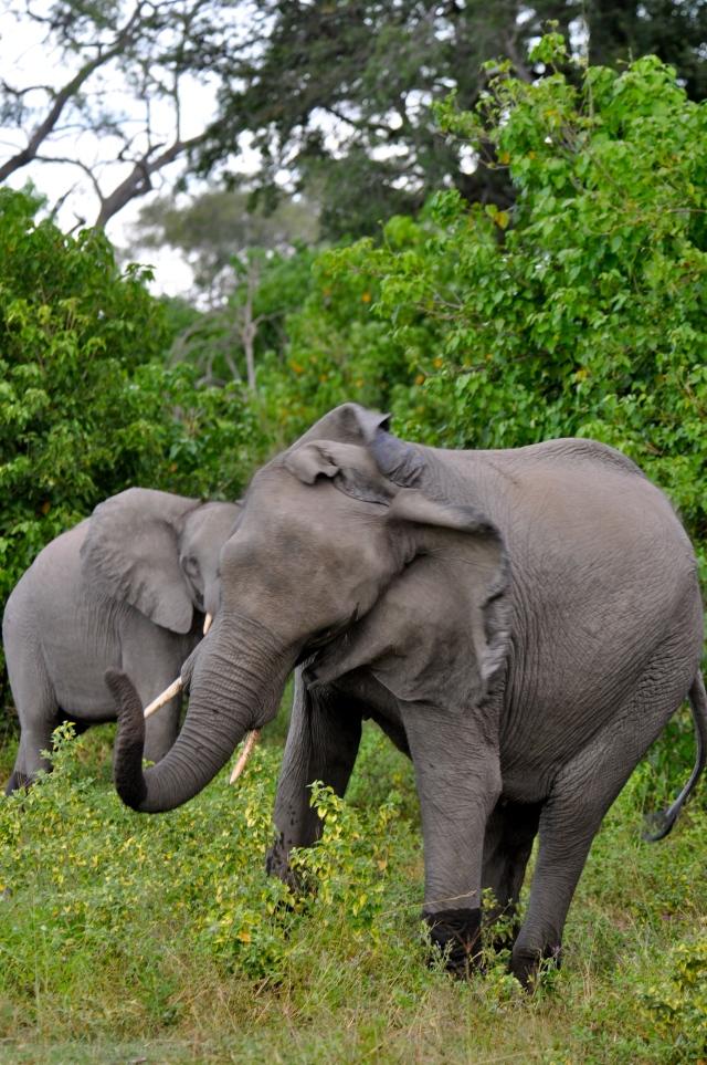 Os elefantes ficaram zangados