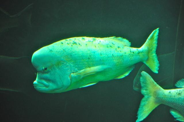The Two Oceans, o aquário de Cape Town.