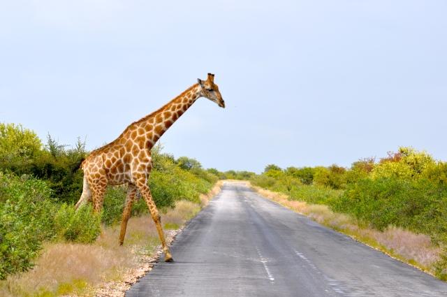 A estrada principal do Parque nacional Etocha