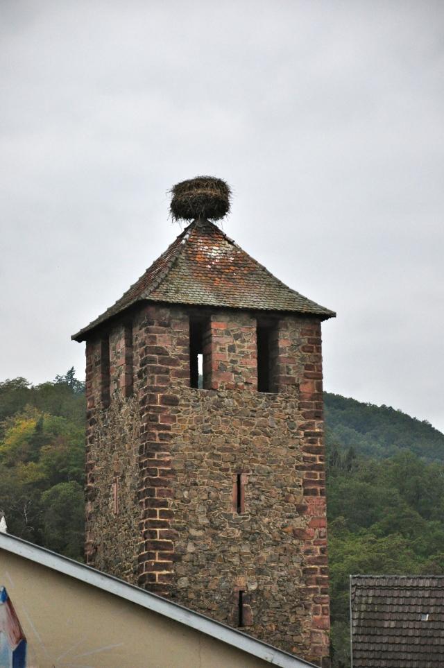 Ninho de cegonha em Kaiserberg