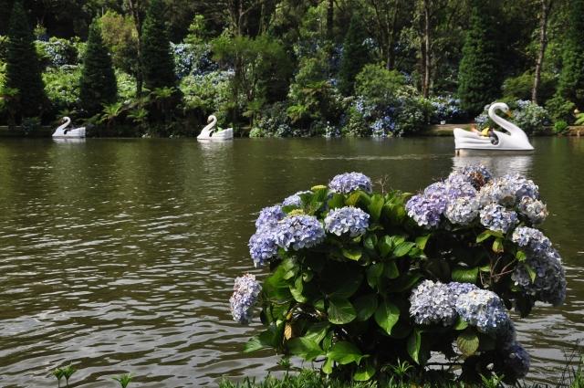 O paisagismo ao redor do lago é um destaque.