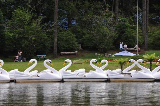 Os pedalinhos fazem a festa no lago.