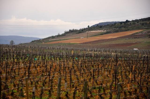 Pinot Noir a uva da Borgonha