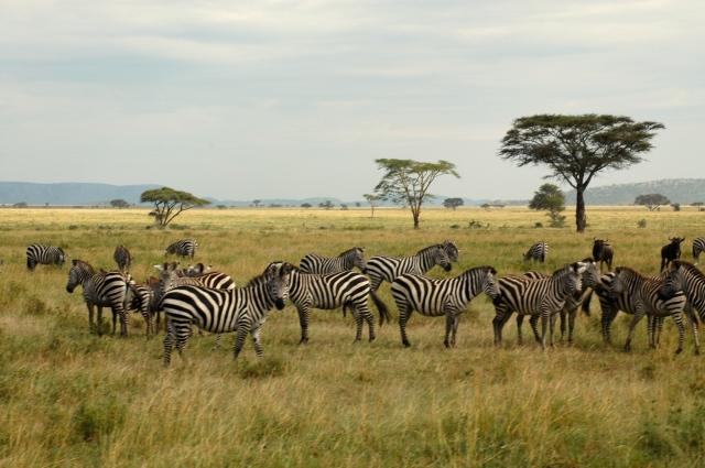 A Planície do Serengeti.