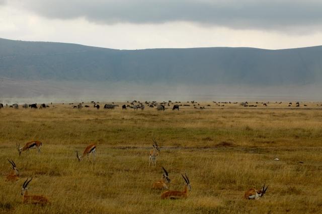 Observe ao fundo os paredões que cercam a Cratera do Ngorongoro