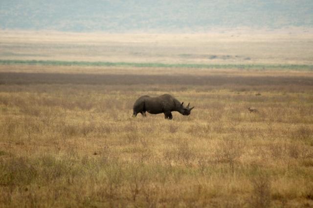 No Ngorongoro, os carros não podem sair das estradas.