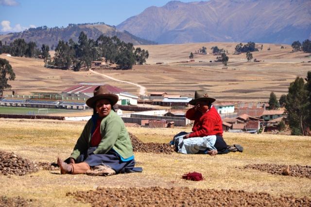 Agricultoras colhendo batatas em Chinchero.
