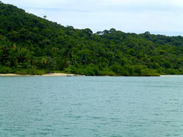 A Mata Atlântica na Praia do Saco