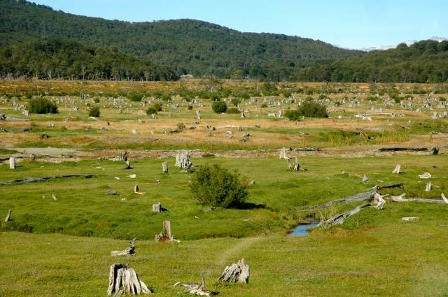 O cemitério de árvores derrubadas pelos prisioneiros de Ushuaia.