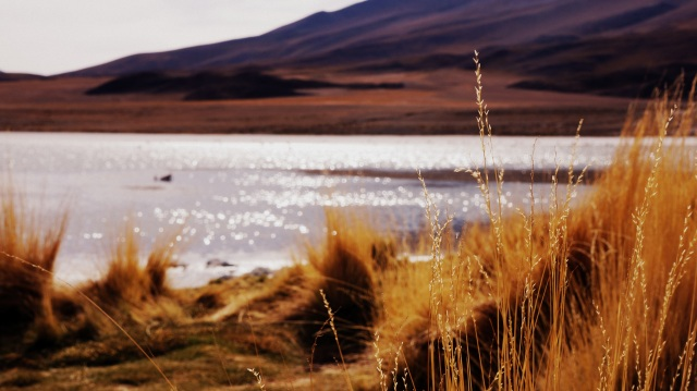 Laguna altiplânica.