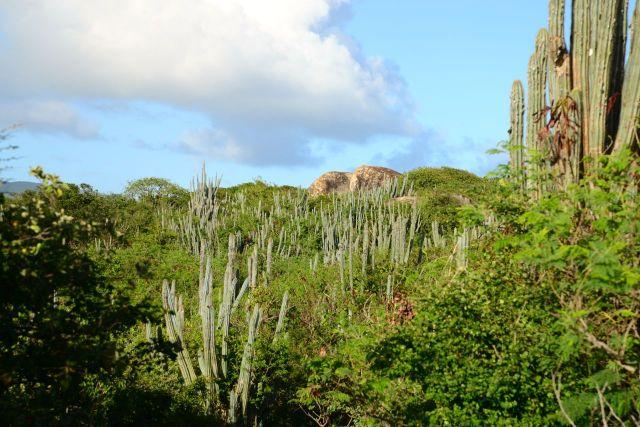 Algumas áreas litorâneas são áridas e possuem vegetações xerófitas.