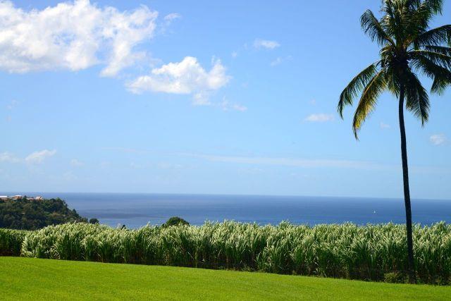 O mar e a cana-de-açúcar, duas marcas das Antilhas.