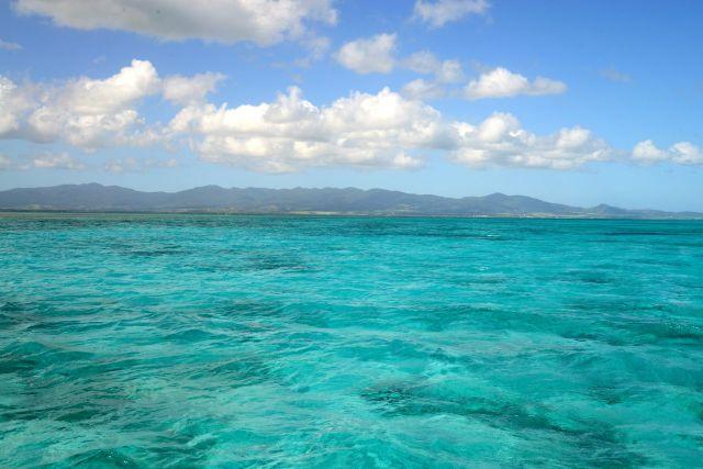 Os corais nos arredores de Guadalupe.
