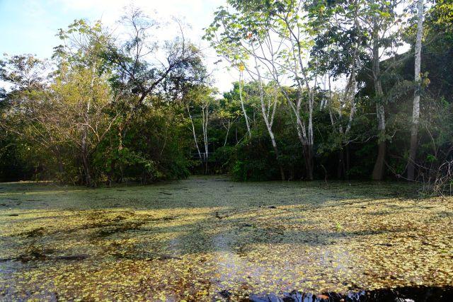 Folhas e frutos sobre as águas dos rios.