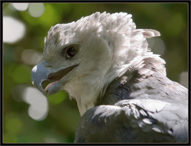 A hárpia - foto do site www.luis.impa.br