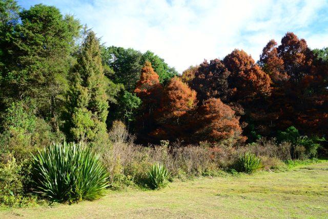 Árvores importadas se misturam no Horto Florestal de Campos do Jordão.