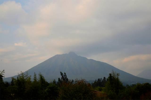 A Montanha dos Gorilas.