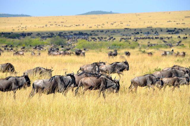 A Savana Africana no Quênia.