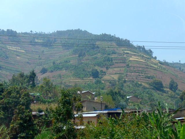 As montanhas de Ruanda são bastante cultivadas.