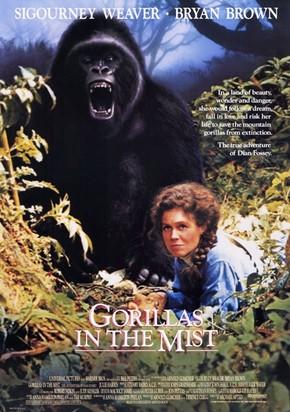 O filme Nas Montanhas dos Gorilas (Gorillas in The Mist), com Sigourney Weaver