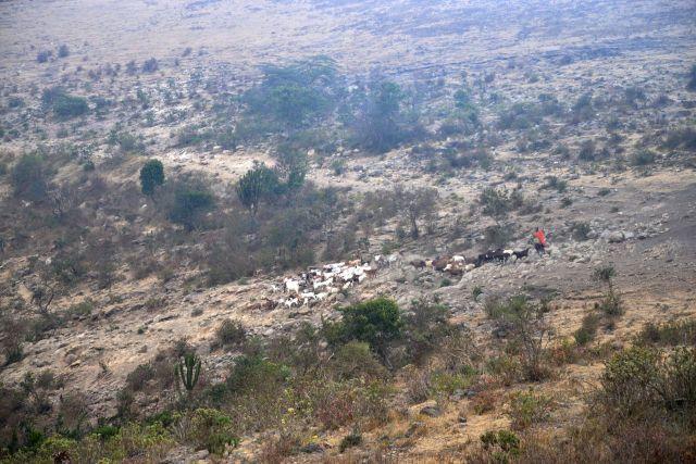 Os Masai levam os seus rebanhos para as pastagens no interior da Cratera.