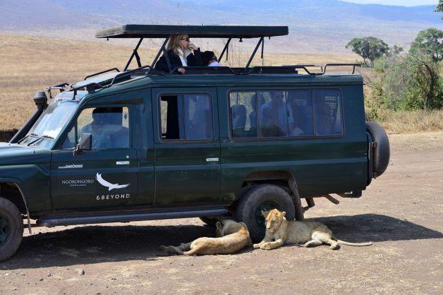 Os leões impediam a saída do carro.