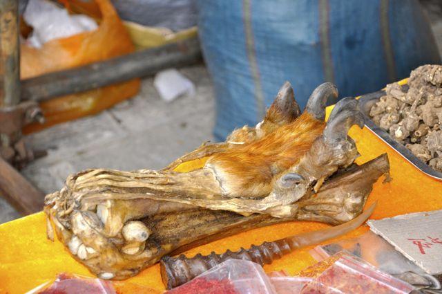 Pata de tigre na Feira de Dali.