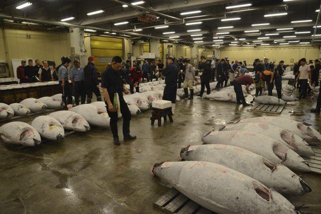 O leilão de atuns de Tóquio