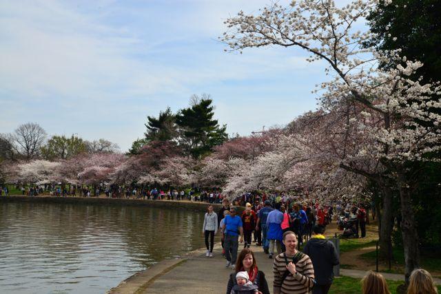 O Parque das Cerejeiras estava lotado.