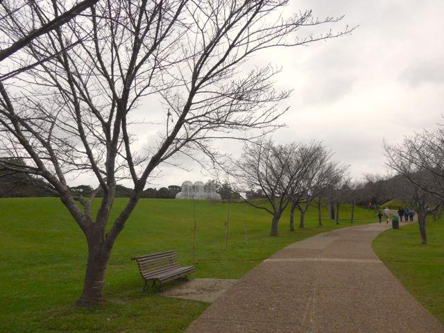 O caminho das cerejeiras.